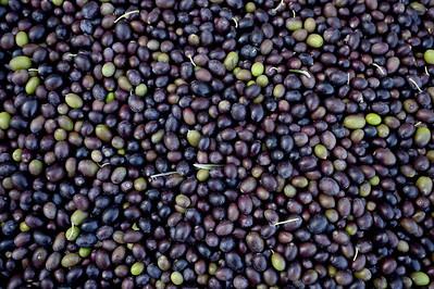 VAC-L-Il Fiorello Olive Oil Co-1020-001