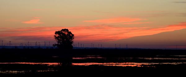 VAC-L-December Sunrise-1208-001
