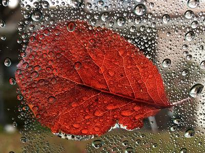 VAC-L-Fallen Leaf & Raindrops-1215-001