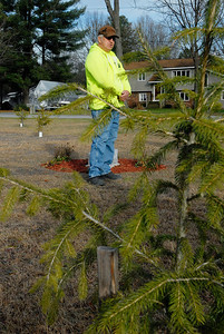 Erica Miller @togianphotog - The Saratogian     Almost one year after the Sandy Hook Elementary School tragic shooting in Newtown Conn. Under the direction of Wilton Highway Superintendent Kirklin Woodcock (speaking), the highway department has planted 26 spruce trees, which were donated by the Town, and a perennial garden, donated by Hewitt's Garden Centers. This ceremony will be held on Town park land at the corner of Ho Hum Lane and Meditation Way, off of Carr Road. A plaque memorializing the twenty school children and six adult staff members was donated by Saratoga Trophy.    SAR-l-TreesSandy5