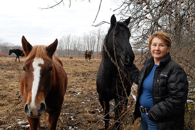 Erica Miller @togianphotog - The Saratogian.     Horses at Ann Arnold's farm on Wilton-Greenfield Road at allegedly are pregnant mares. The property is under Ann Arnold's brothers name, the facilitator of the property after the deed was transferred to him. Allegedly there are ten horses with one ready to foal anyway. Jo Brennan pets one of the dozen horses on the property line.     SAR-l-AnnArnold17
