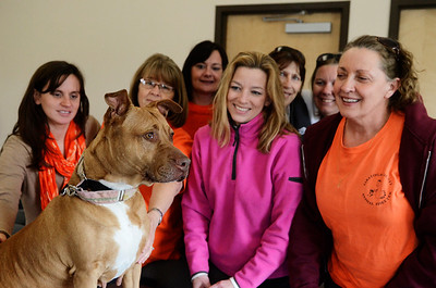Erica Miller @togianphotog - The Saratogian:    Volunteers with Momma at the Saratoga Animal Shelter on Thursday morning, April 17th, 2014. Momma was rescued one year ago Saturday from a drug raid in Saratoga Springs on Grand Ave.