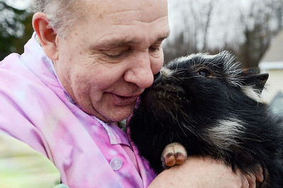 Erica Miller @togianphotog - The Saratogian.   On Wednesday morning, the day before Thanksgiving 11/27/13, Mike Fitzgerald spoke inside his store in Clifton Park at Saratoga Sweets. The stores mascot are the two adorable kunekune pigs from New Zealand named Charlie, left, and Clyde, not shown.   SAR-l-SarSweetPigs3