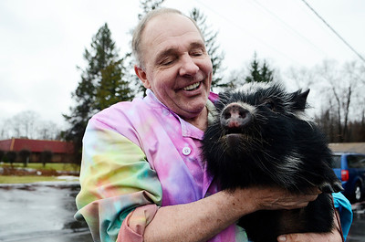 Erica Miller @togianphotog - The Saratogian.   On Wednesday morning, the day before Thanksgiving 11/27/13, Mike Fitzgerald spoke inside his store in Clifton Park at Saratoga Sweets. The stores mascot are the two adorable kunekune pigs from New Zealand named Charlie, left, and Clyde, not shown.   SAR-l-SarSweetPigs4