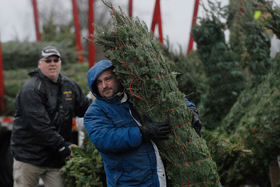 Erica Miller @togianphotog - The Saratogian.   On Wednesday morning, the day before Thanksgiving 11/27/13, over 720 Christmas trees from Vermont arrived at Curtis Lumber for the annual Rotary tree sale. Waiting in the cold rain, bundles up in a shed waited over 60 volunteers. Joining together with Ballston Spa Rotary Club were Saratoga Bridges, Boy scouts from Troop 1, 2 and 246, Ballston Spa HS Interact Club and teachers, Ballston Spa Lions Club, Ballston Spa Football teammates, Twin Bridges and Mechanicville's Rotary Club, family friends and other volunteers.     SAR-l-RotaryTREES12