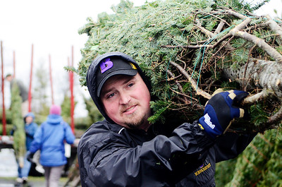 Erica Miller @togianphotog - The Saratogian.   On Wednesday morning, the day before Thanksgiving 11/27/13, over 720 Christmas trees from Vermont arrived at Curtis Lumber for the annual Rotary tree sale. Waiting in the cold rain, bundles up in a shed waited over 60 volunteers. Joining together with Ballston Spa Rotary Club were Saratoga Bridges, Boy scouts from Troop 1, 2 and 246, Ballston Spa HS Interact Club and teachers, Ballston Spa Lions Club, Ballston Spa Football teammates, Twin Bridges and Mechanicville's Rotary Club, family friends and other volunteers.     SAR-l-RotaryTREES5
