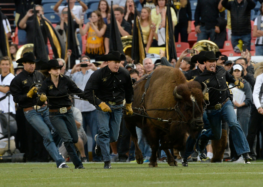 . DENVER, CO. - AUGUST 29: CU\'s Ralphie the Buffalo and it\'s handlers head out on to the field during pre-game before CU played CSU the Rocky Mountain Showdown at Sports Authority Field at Mile High Friday evening, August 29, 2014. Phillip Lindsay, gets in on the play. (Photo By Andy Cross / The Denver Post)