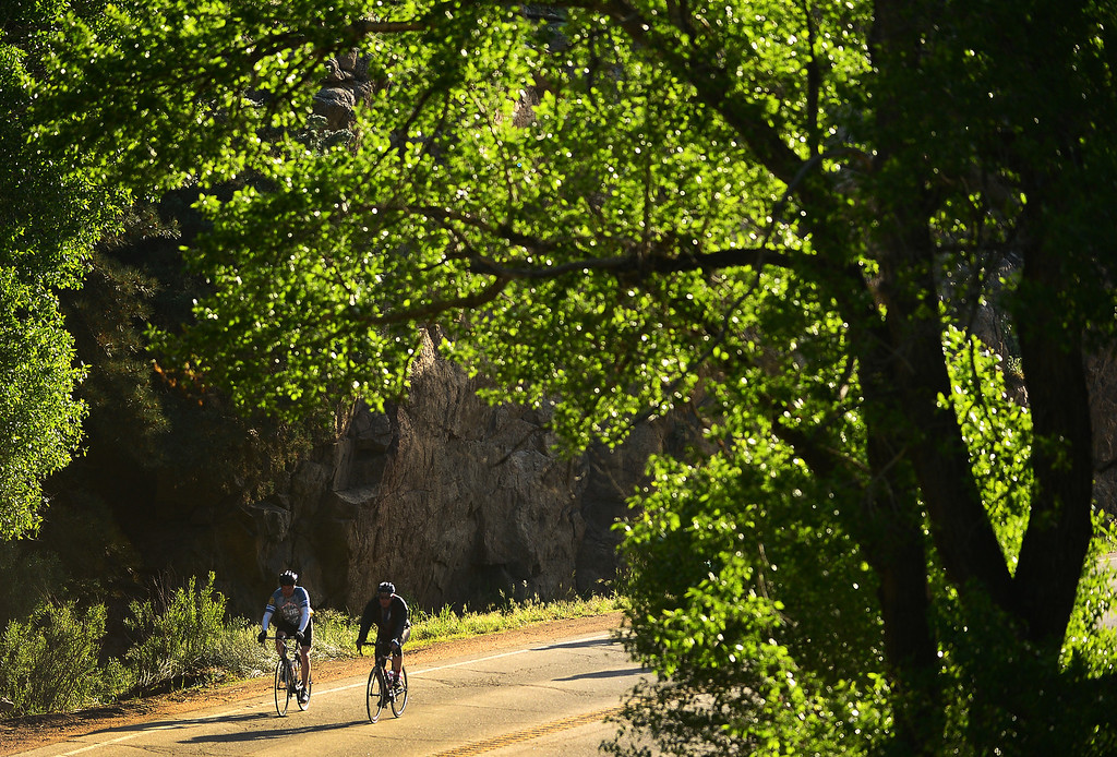 . Ride the Rockies cyclists make their way up Boulder Canyon in Boulder, CO, on the first day of the bicycling event on June 8, 2014.   (Photo By Helen H. Richardson/ The Denver Post)