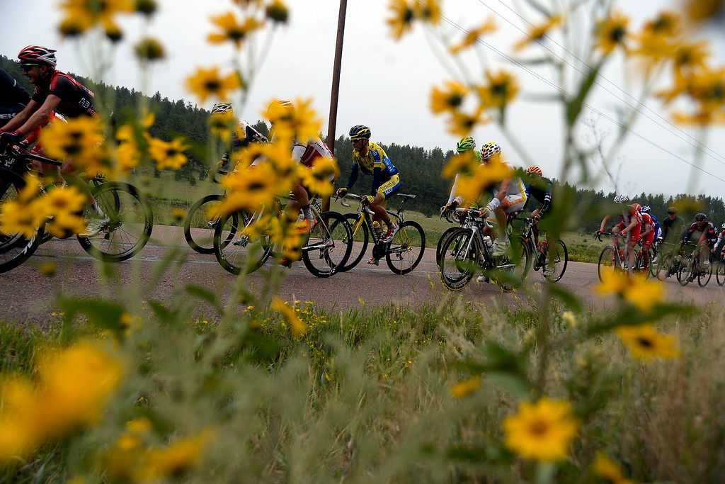 . BRECKENRIDGE, CO - AUGUST 22: Riders make their way past wildflowers during stage 5. The USA Pro Challenge stage 5 on Friday, August 22, 2014. (Photo by AAron Ontiveroz/The Denver Post)