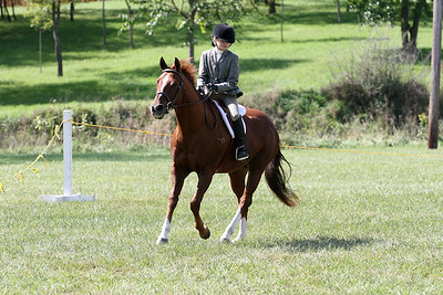Equine  039