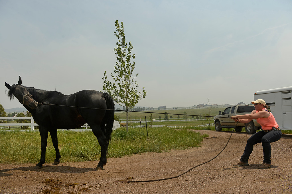 . Volunteer horse trainer Kyle Kimball tires to coax one of five horses to come near the trailer to load her up.  Kimball helped rancher Alan Erickson evacuate five of his horses from his property along Shiloh Ranch Drive to protect them from the approaching Black Forest Fire near Black Forest, CO, on June 13, 2013.  Photo by Helen H. Richardson/The Denver Post)