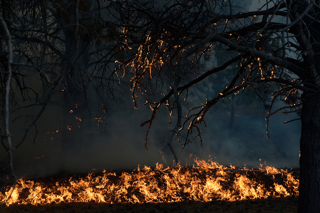 . COLORADO SPRINGS, CO - JUNE 11: Fire runs along the bed of the forest off of Herring Road in the Black Forest northeast of Colorado Springs, CO on June 11, 2013. Many homes have already been lost to the raging fire that continues to burn out of control. Photo by Helen H. Richardson/The Denver Post)