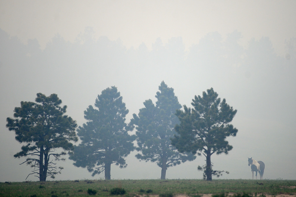 . COLORADO SPRINGS, CO - JUNE 13: A horse grazes as winds blow smoke into its pasture as the Black Forest fire burns east of Colorado Springs. (Photo by AAron Ontiveroz/The Denver Post)