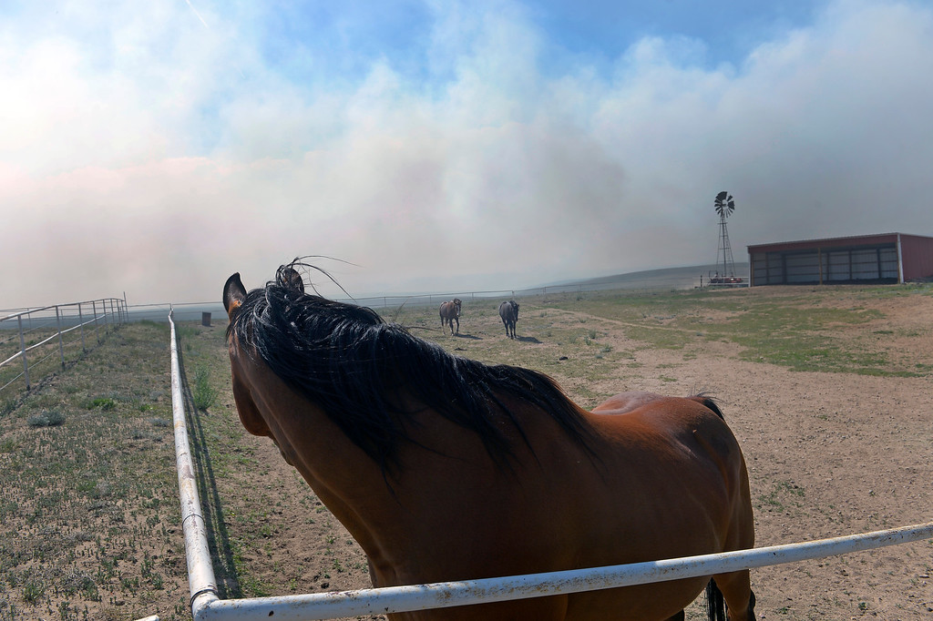 . COLORADO SPRINGS, CO - JUNE 12: As their owners work aggressively to create a fire line around their ranch just off of Black Forest Road to save it from the Black Forest Fire, their horses watch attentively as smoke from the fire swirls around them on their ranch off of Black Forest Road  on June 12, 2013.   Photo by Helen H. Richardson/The Denver Post)
