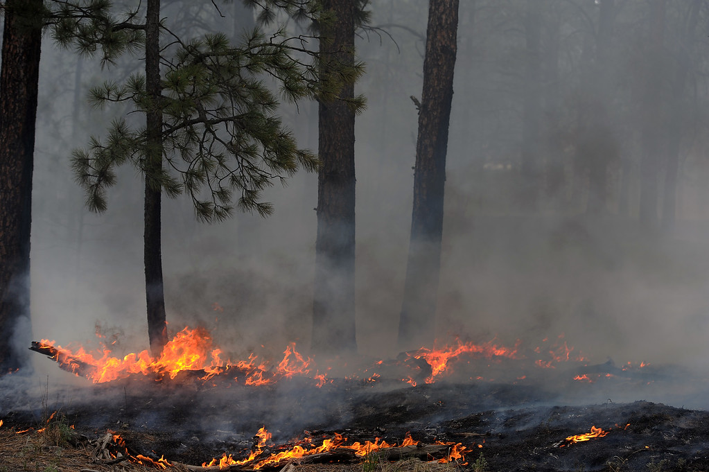 . BLACK FOREST, CO - JUNE 13:  Trees smolder in the midst of the Black Forest Fire on June 13, 2013.  Photo by Helen H. Richardson/The Denver Post)