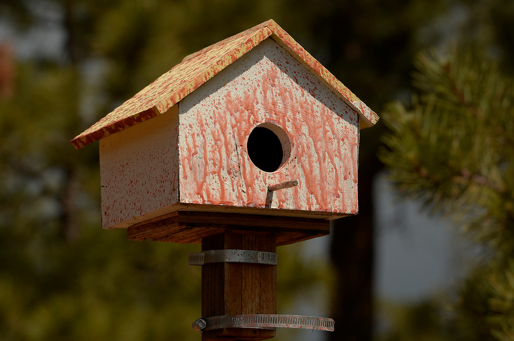 . BLACK FOREST, CO - JUNE 17:   A birdhouse is covered in slurry but still standing inside the Black Forest Burn area on June 17, 2013.   Photo by Helen H. Richardson/The Denver Post)