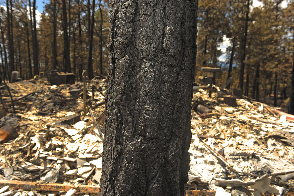 . BLACK FOREST, CO - JUNE 17:   Burned bark on a tree near the remnants of a structure show how hot the fire came through this area in the Black Forest Fire on June 16, 2013.  Photo by Helen H. Richardson/The Denver Post)