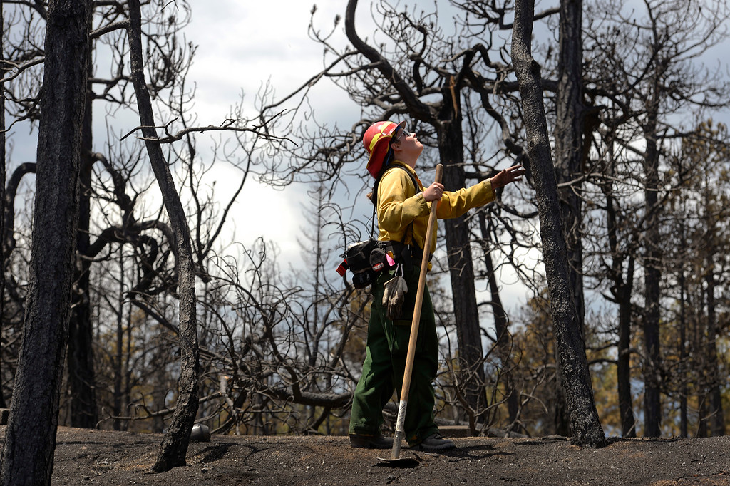 . BLACK FOREST, CO - JUNE 17:   Salida Fire Department firefighter Brandie Smith, looks over burned property in the Black Forest Fire zone on June 17, 2013.  The crew is checking for hotspots as well as marking  trees that they deem dangerous that might fall over  on burned properties.  They mark them and sawyers can come in later to cut them down.  The crew also looks above in the burned canopy of trees looking for any limbs or trees that might fall over that might injure someone.  The fire is now 75% contained and recent rains are helping firefighters. Photo by Helen H. Richardson/The Denver Post)