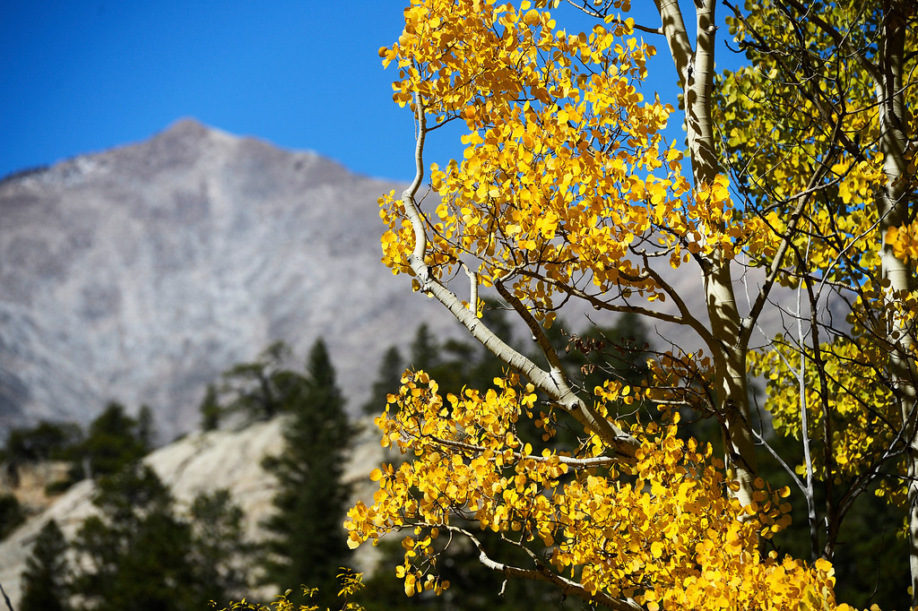 . ALLENSPARK, CO - SEPTEMBER 28:  Fall colors with Mt. Meeker in the background near Boulder County Rd. 82E near highway 7 Saturday afternoon, September 28, 2013.(Photo By Andy Cross/The Denver Post)