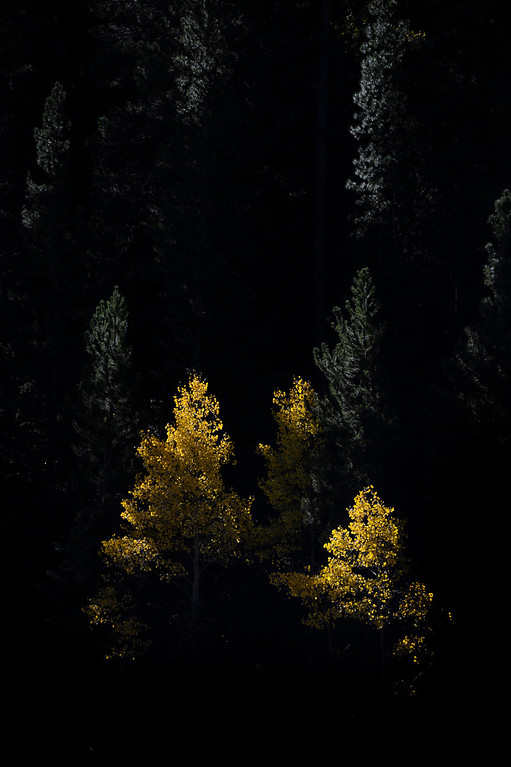 . CENTRAL CITY, CO - SEPTEMBER 28: Aspen trees changing colors near Central City Colorado along along highway 119 Saturday morning, September 28, 2103. (Photo By Andy Cross/The Denver Post)