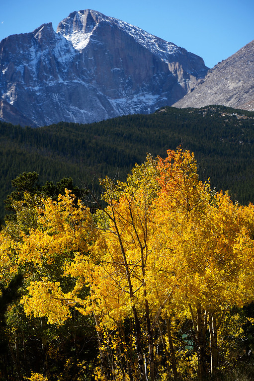 . ESTES PARK, CO - SEPTEMBER 28: Aspen trees showing off their fall colors  underneath Longs Peak along highway 7 Saturday morning, September 28, 2103. (Photo By Andy Cross/The Denver Post)