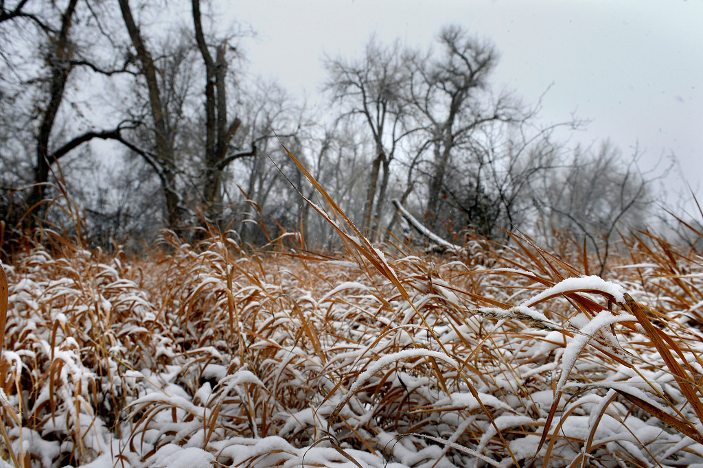 . A layer of snow covers Ketring Park in Littleton, CO January 04, 2014. Temperatures will linger in the low 20s Saturday as a storm drops anywhere from 3 to 5 inches of snow in the Denver metro area, forecasters say.(Photo By Craig F. Walker / The Denver Post)
