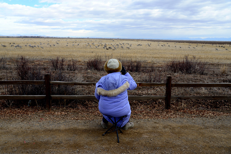 . Sheila Thompson, of Denver, waits to photograph a Sandhill crane taking off or doing a mating dance at one of the viewing areas in Monte Vista National Wildlife Refuge on Friday, March 7, 2014. Colorado\'s San Luis Valley revels every spring as more than 20,000 Sandhill cranes hang out for a month at the Monte Vista National Wildlife - an established artificial haven where people place barley and pump up water from underground aquifers to create the massive marshes the birds need to gain energy for their migration north. A new Colorado rule limiting pumping of aquifer water in San Luis Valley could affect the habitat. (Photo By Lindsay Pierce/The Denver Post)
