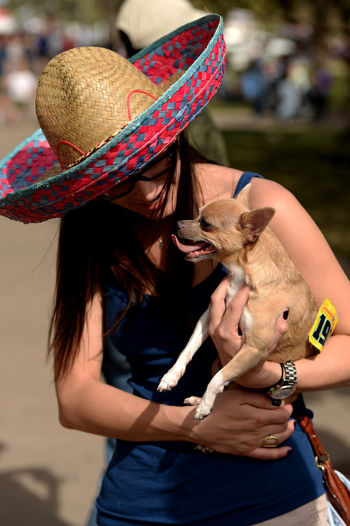 . Lauren Cisco hugs her dog Lucy after participating in the chihuahua dog races during the Cinco de Mayo celebrations at Civic Center Park in Denver, CO on May 24 2014.  This year\'s grand prize was $500 for the fastest chihuahua. (Photo By Helen H. Richardson/ The Denver Post)