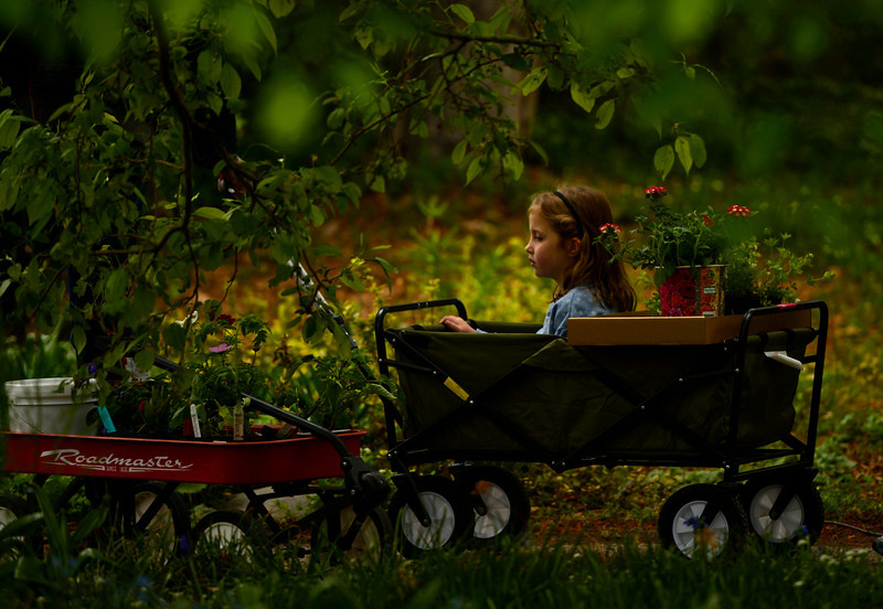 . Surrounded by plants four-year-old Kenna rides in a wagon as her father and grandmother shop during Denver Botanic Gardens annual spring plant sale, May 09, 2014. The sale will go through Saturday. (Photo by RJ Sangosti/The Denver Post)