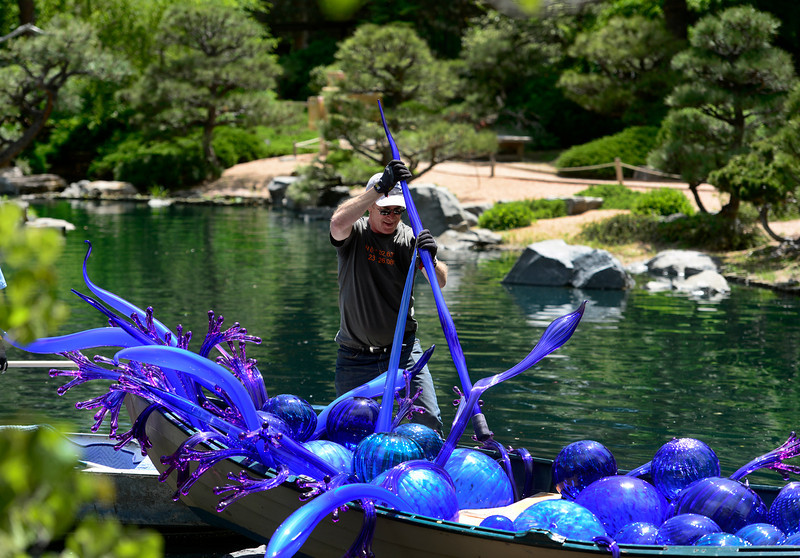 . Tom Lind, project manager from the Chihuly studio team, carefully places the pieces for Blue and Purple Boat & Walla Wallas. The Denver Botanic Gardens continues preparations for the opening of the outdoor exhibition of artwork by artist Dale Chihuly. Chihuly\'s design and installation team from Seattle, Wash. are on hand this week at the Gardens, installing the glass sculptures ranging in size, form, and color across the 24-acre property. The exhibit officially opens to the public on June 14, 2014 and runs through November 30. (Photo by Kathryn Scott Osler/The Denver Post)