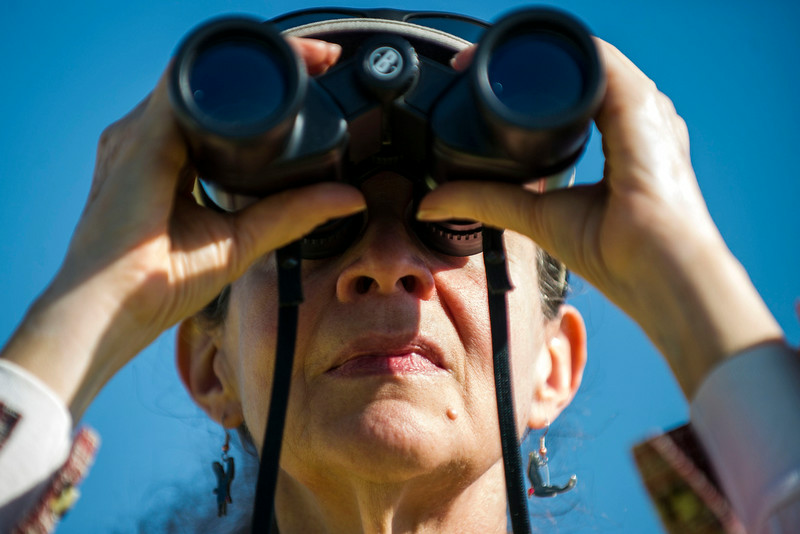 . Josette Mastra looks through binoculars while surveying a nest with a female eaglet along E120th Avenue near, E-470 where an eagles nest is located on Thursday, July 03, 2014 in Commerce City, CO.  Volunteers rotate in shifts to keep watch over the baby eagle, as it is expected to take flight soon, and it\'s nests proximity to E-470 tollway is worrisome. (Photo by Kent Nishimura/The Denver Post)