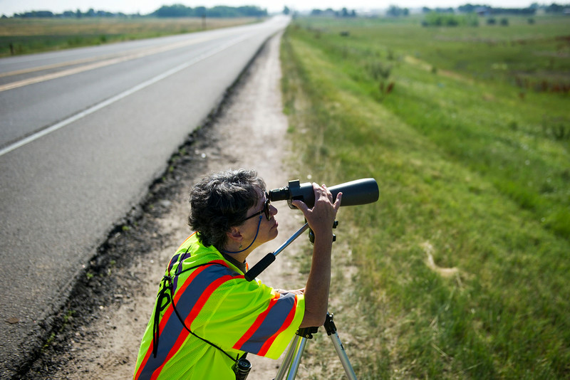 . Karen Metz peers thought a spotting scope looking at an eagles nest where a female eaglet is expected to take flight soon, along E120th Avenue near, E-470 on Thursday, July 03, 2014 in Commerce City, CO.  Volunteers rotate in shifts to keep watch over the baby eagle, as it is expected to take flight soon, and it\'s nests proximity to E-470 tollway is worrisome. (Photo by Kent Nishimura/The Denver Post)