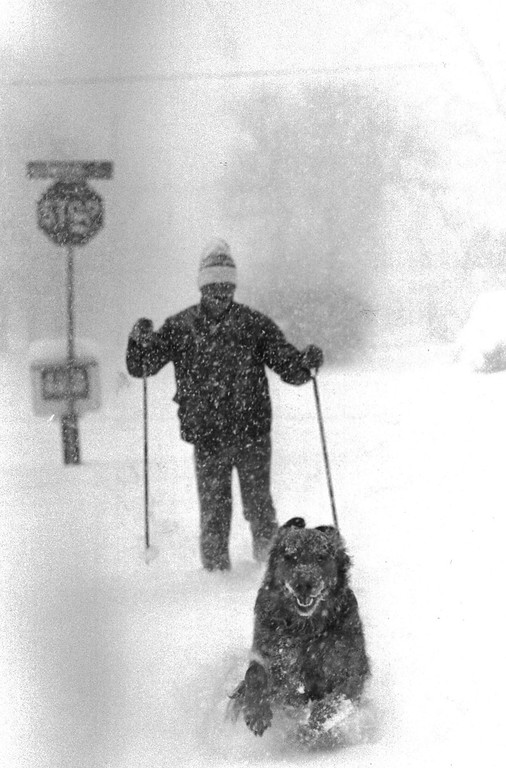 . Rick Slezak ofl Denver skied to the newspaper box this morning at 7:30 AM with his dog Beau to get his morning paper but there were no new papers in the box yet because of the roads. This was the 1800 block of South Downing. Lyn Alweis, The Denver Post