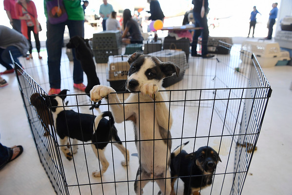 2016-05-04 Dog is My Copilot