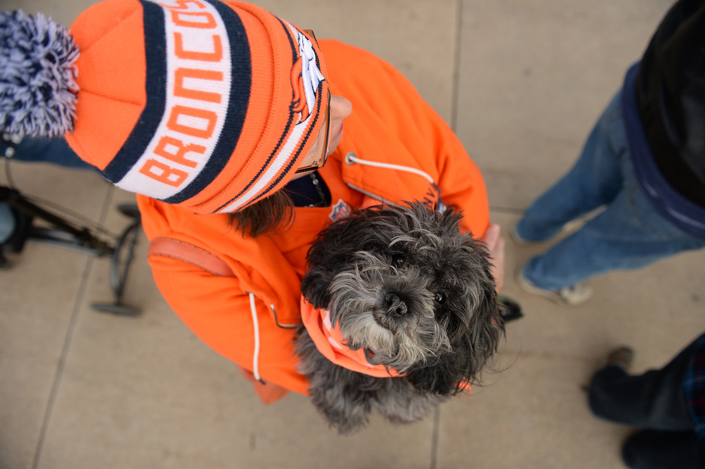 . Toba Zaritsky waits in line with her dog, Dalai, to buy tickets for the up coming game at Sports Authority Field at Mile High, January, 10 2014. The Denver Broncos will take on the San Diego Chargers in the second round of the NFL playoffs in Denver. (Photo by RJ Sangosti/The Denver Post)