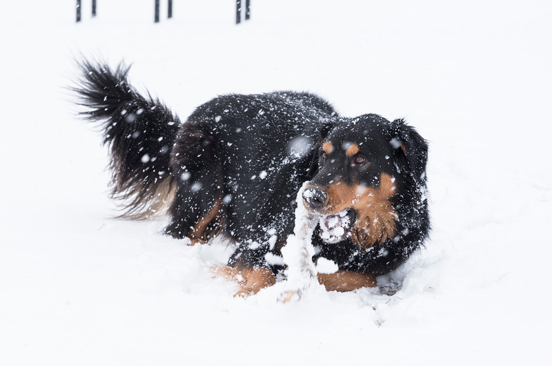 Wednesday snow storm 3