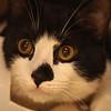 Lynn011818-Owen-fostering a cat1
