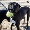 1 26 19 Peabody Dog Park