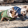 1 26 19 Peabody Dog Park 4