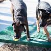 1 26 19 Peabody Dog Park 2