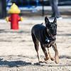 1 26 19 Peabody Dog Park 3