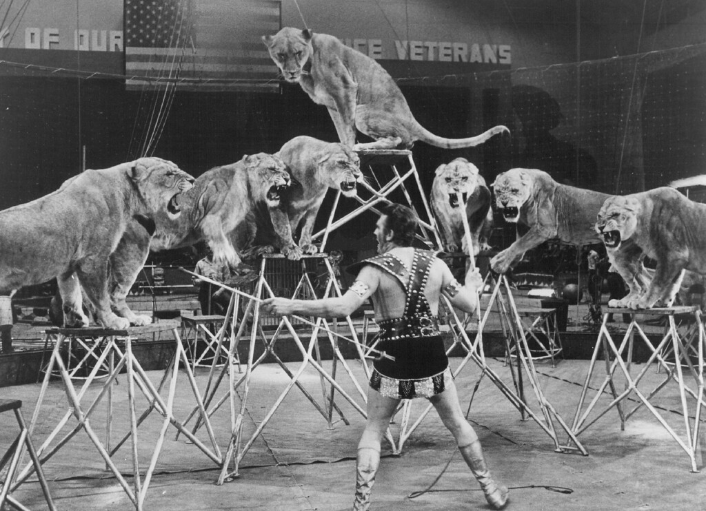 . SEP 24 1971 - ROARING ACT - Europe\'s magnificent lion trainer, Wolfgang Holzmair, makes his American debut in the 101st Edition of RINGLING BROS. AND BARNUM & BAILEY CIRCUS... The Greatest Show on Earth! (Denver Post digital archive photo)