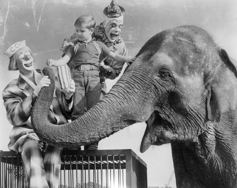 . AUG 25 1965 - Coco the Clown and one of his Clown Alley cohorts give lessons to a little boy on the art of feeding peanuts to Targa, a very placid pachyderm who is a member of the 1965 edition of the Ringling Bros, and Barnum and Bailey Circus that will play Sept. 15 through Sept. 19, at Denver Coliseum. Ten performances are scheduled. There will be 30 new European acts featured. (Denver Post digital archive photo)