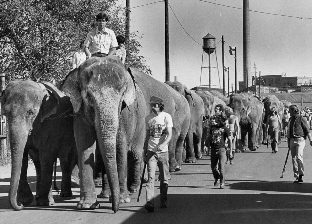 . OCT 1 1980 - The circus has arrived. A herd of 18 elephants, left, led the way Wednesday as the Ringling Brothers and Barnum & Bailey Circus arrived in town for its 101st series of performances here. The animals paraded from their train, parked at the Burlington Northern siding in northeast Denver, to the Denver Coliseum\'s animal quarters. The circus started Thursday and will be in town until Oct. 12. It was a nice day to be outside anyway, but the procession made it even more pleasant for this group of youngsters, lower left. The parade, which is a free show of sorts in itself, also featured some of the two-legged circus performers, below. There will be 21 performances while the circus is in Denver, and details on times and tickets are available at 892-0800. (Duane Howell/The Denver Post)
