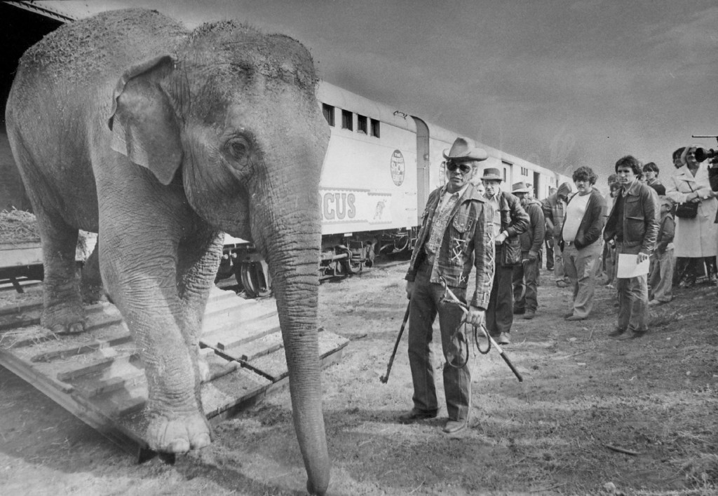 """. SEP 30 1977 - Traditional \""""Animal Walk\"""" Circus Parade Draws Spectators. A large elephant, a performer in the Ringling Bros, and Barnum & Bailey Circus lumbers out of a boxcar Wednesday to announce the arrival of the circus. The elephant is directed by Ringling\'s famous animal trainer Gunther Gebel-Williams. The one-mile animal parade from the rail yards at Race St. and Race Court to the Coliseum is the traditional start of the circus. The circus opens Thursday for performances through Oct. 16. (Duane Howell/The Denver Post)"""