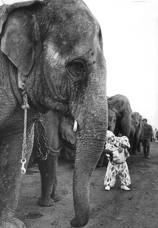 """. SEP 18 1968 - Hey Gang, the circus is in town. Frankie Saluto, a clown with the Ringling Bros. and Barnum & Bailey Circus, visits with his friends the elephants as the \""""greatest show on earth\"""" tilled into the union Pacific at 44th... (Bill Wunsch/The Denver Post)"""