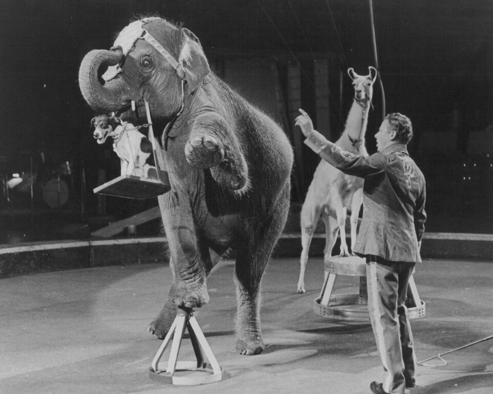 . SEP 14 1972 - QUAINT QUADRUPEDS - Axel Gautier presents unusual mixed animals, a few of the more than 200 performing animals, in the all-new 102nd Edition of RINGLING BROS. AND BARNUM & BAILEY CIRCUS. (Denver Post digital archive photo)