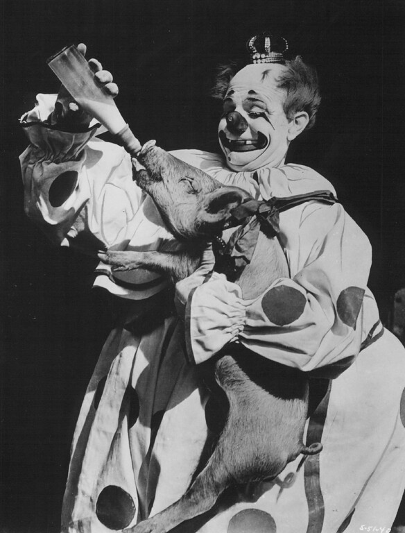 . AUG 24 1958 - Felix Adler, one of the star clowns with Ringling Bros and Barnum & Bailey Circus, is also the world\'s greatest ham trainer, for in his years with the Big Show he has purchased and trained more than 100 of the little porkers. All are named Amelia, after his wife, who is the only lady clown to be seen anywhere. (Denver Post digital archive photo)