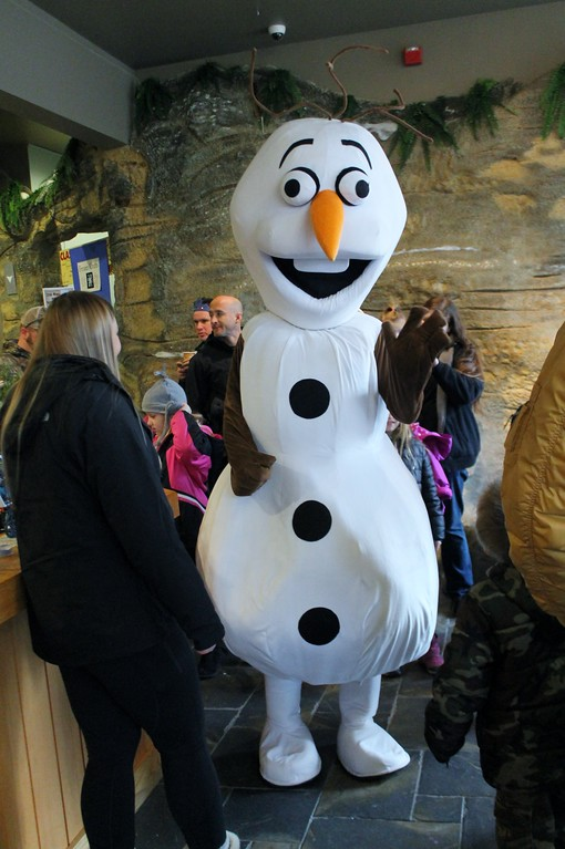 . Olaf from Disney\'s \'Frozen\' does a meet and greet with attendees at Geauga Parks Frozen Fest. (Kristi Garabrandt/The News-Herald)