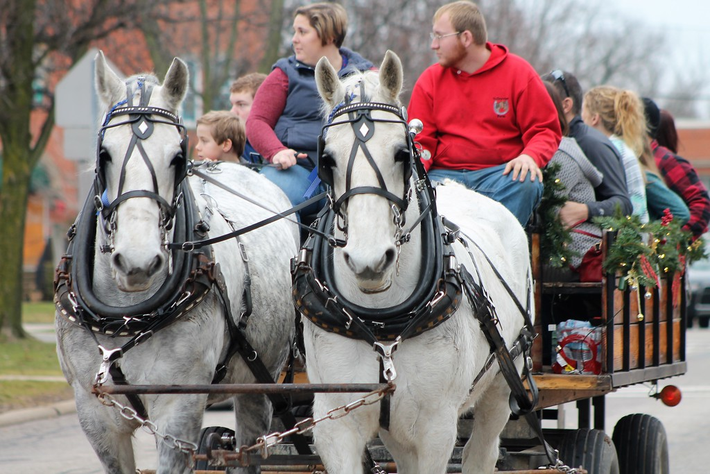 . Chardon Square Association sponsored Horse and Carriage Rids for the Chardon Winterfest. (Kristi Garabrandt/The News-Herald).